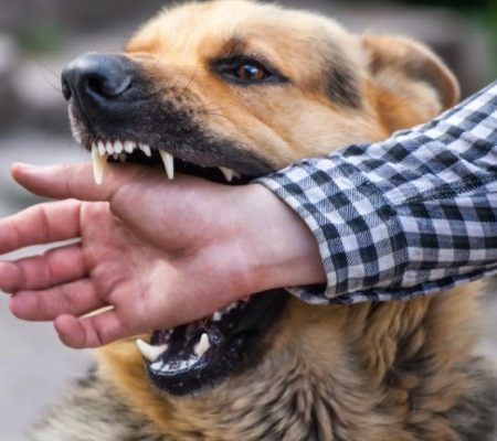 Выживание, бой против собаки