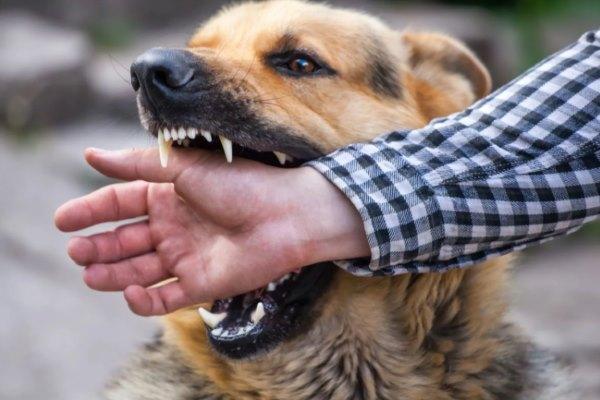 выживание-бой-против собаки